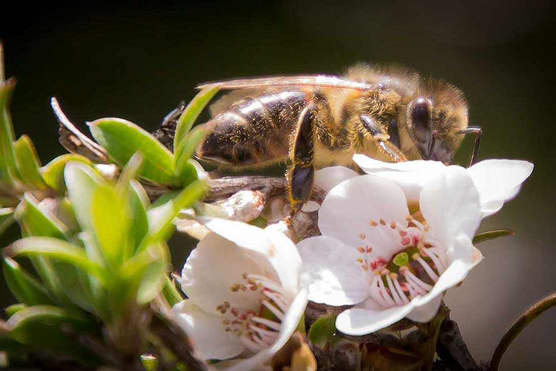 The science of saving our honey bees